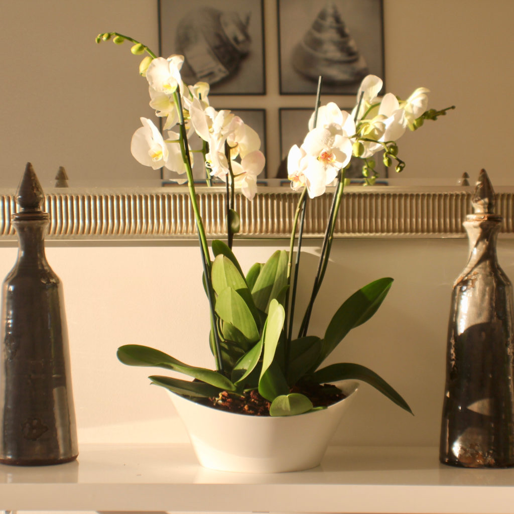 Orchids in dish and tall vases on console