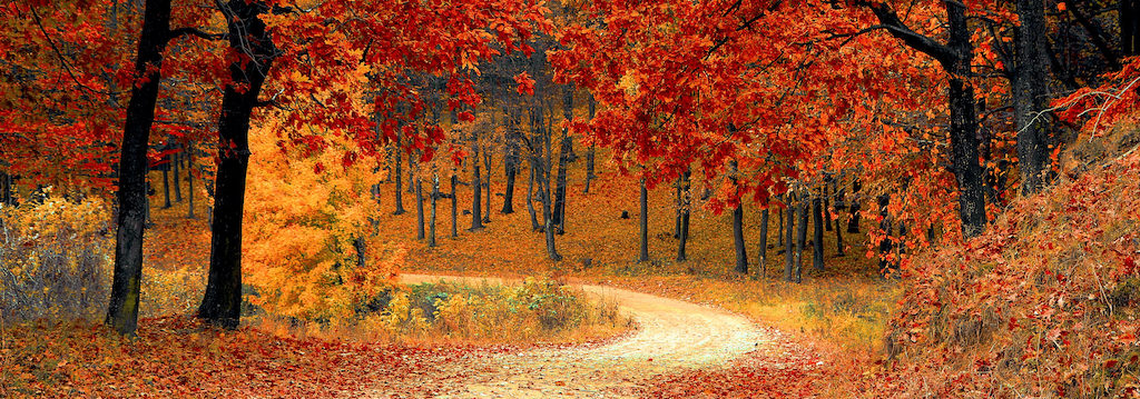 Red leaves on trees and winding path in autumn